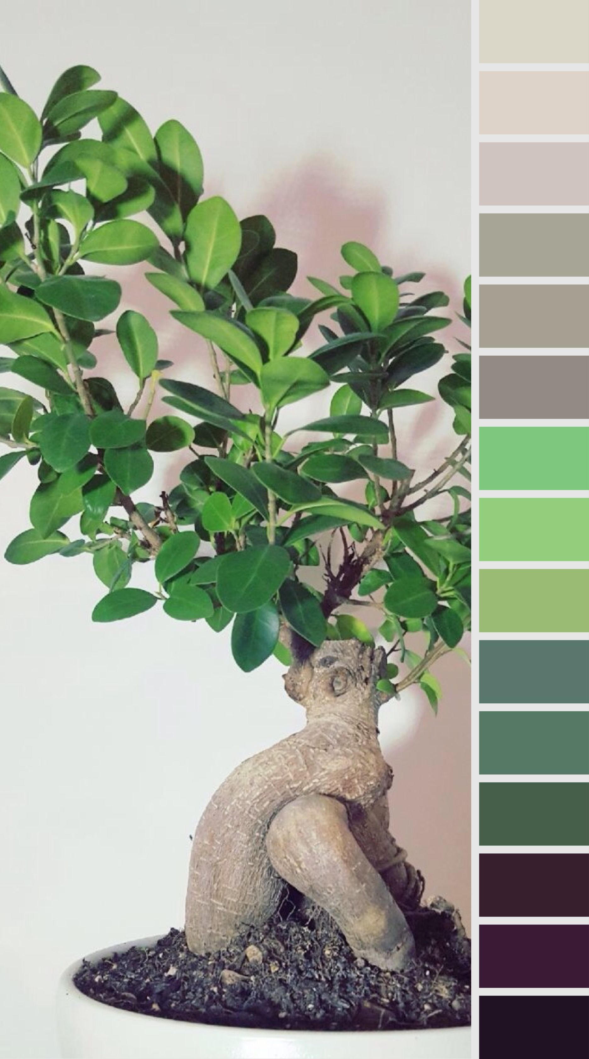 bonsai #colorpalette #colorpalettes #colour #colours #green #design ...