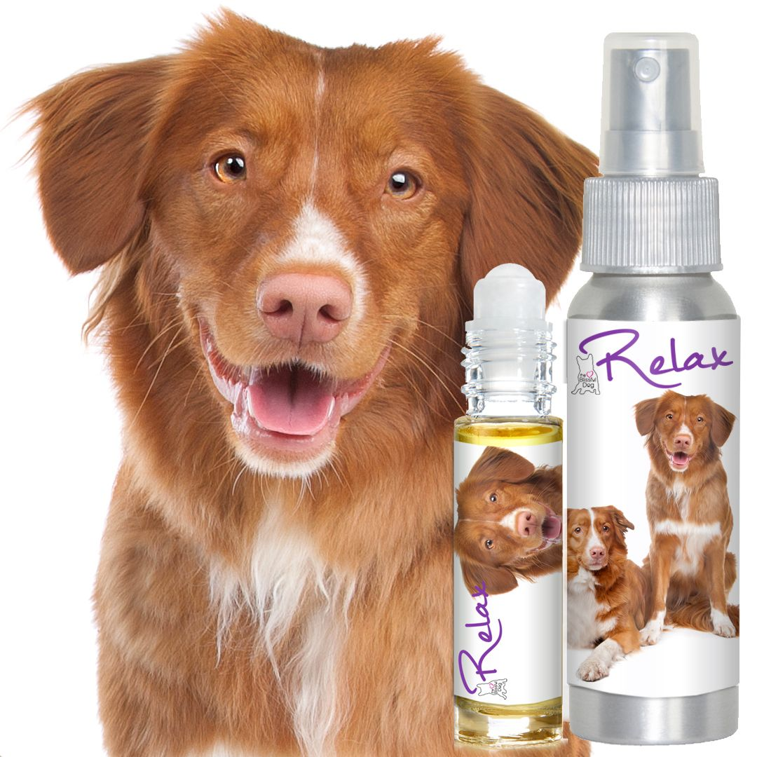 Does your Nova Scotia Duck Tolling Retriever melt down at