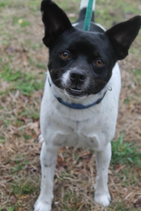 Adopt Willie 2663 On Petfinder Pet Adoption Dog Adoption Dogs