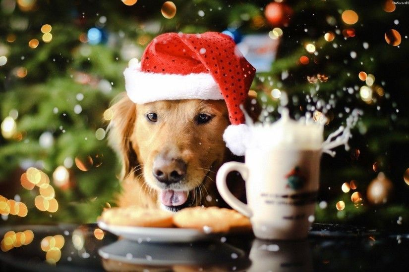 Dog Wallpapers Full Hd Wallpaper Search Christmas Christmas Puppy Dog Wallpaper Christmas Dog