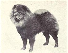 The Original Chow Chow One Of The Most Ancient Breeds Of Dogs