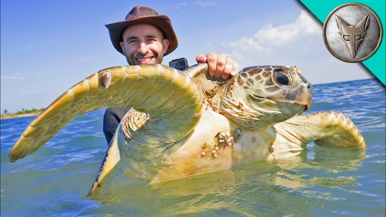 Catching Sea Turtles! YouTube Sea turtle facts, Pet
