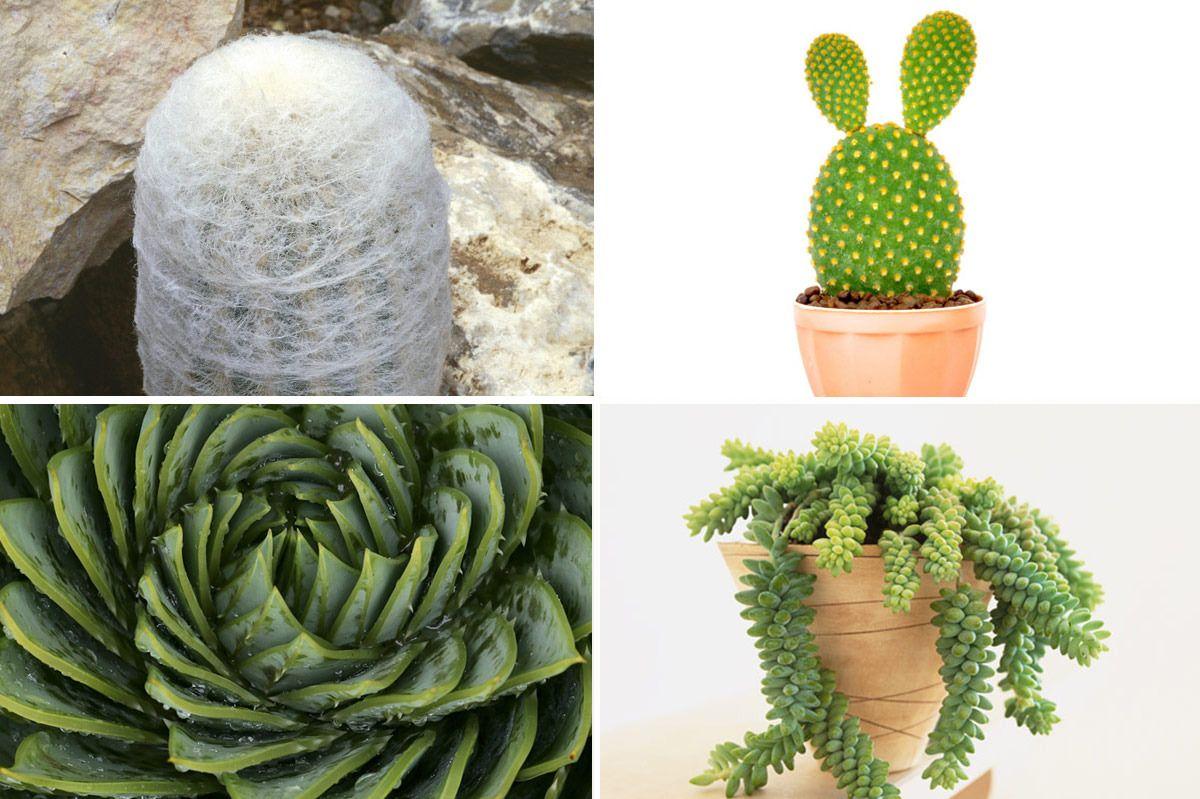 Kill Your Succulents Succulents, Cactus plants, Plants
