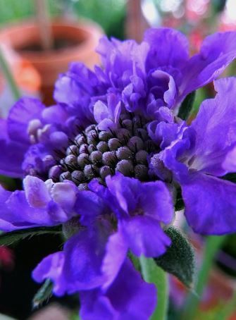 Best 25 beautiful purple flowers for your garden pinterest all purple flowers are beautiful and with meanings of their own so which do you prefer beautiful purple flowers for your garden wallpaper wedding mightylinksfo