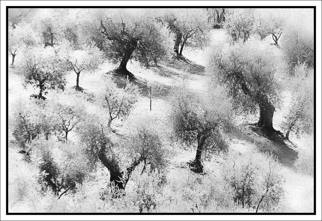 Sfida Tematica n.2 - Tema: Paesaggi & Natura - Pagina 1 | 19-07-2012 21:40:51 | Canon Club Italia Forum