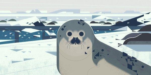 Kevin Dart // Seals