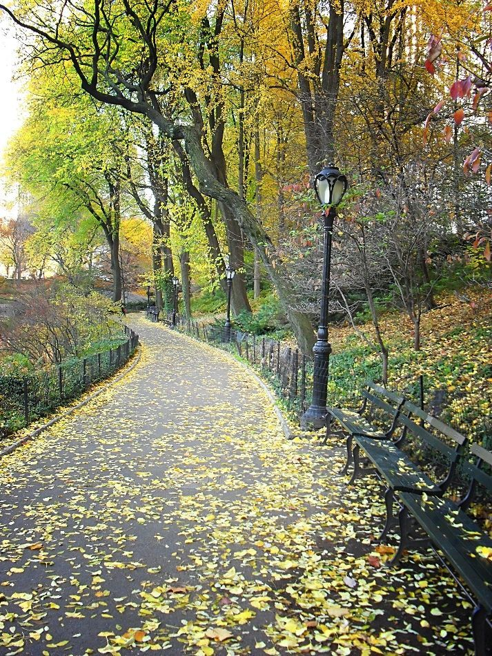 New York Central Park in autumn parisnewyork #newyorkcitytravel #centralparknyc #newyorkcentral #iloveny #citythatneversleeps #parkcity #autumninnewyork #parcs #autumninnewyork
