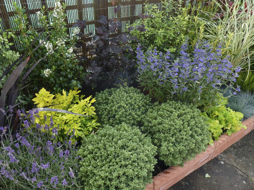 Low maintenance landscaping shrubs garden pinterest for Low maintenance border shrubs