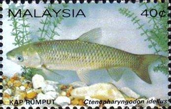 Stamp Grass Carp Ctenopharyngodon Idellus Malaysia Freshwater Fishes Mi My 261a Sn My 258b Yt My