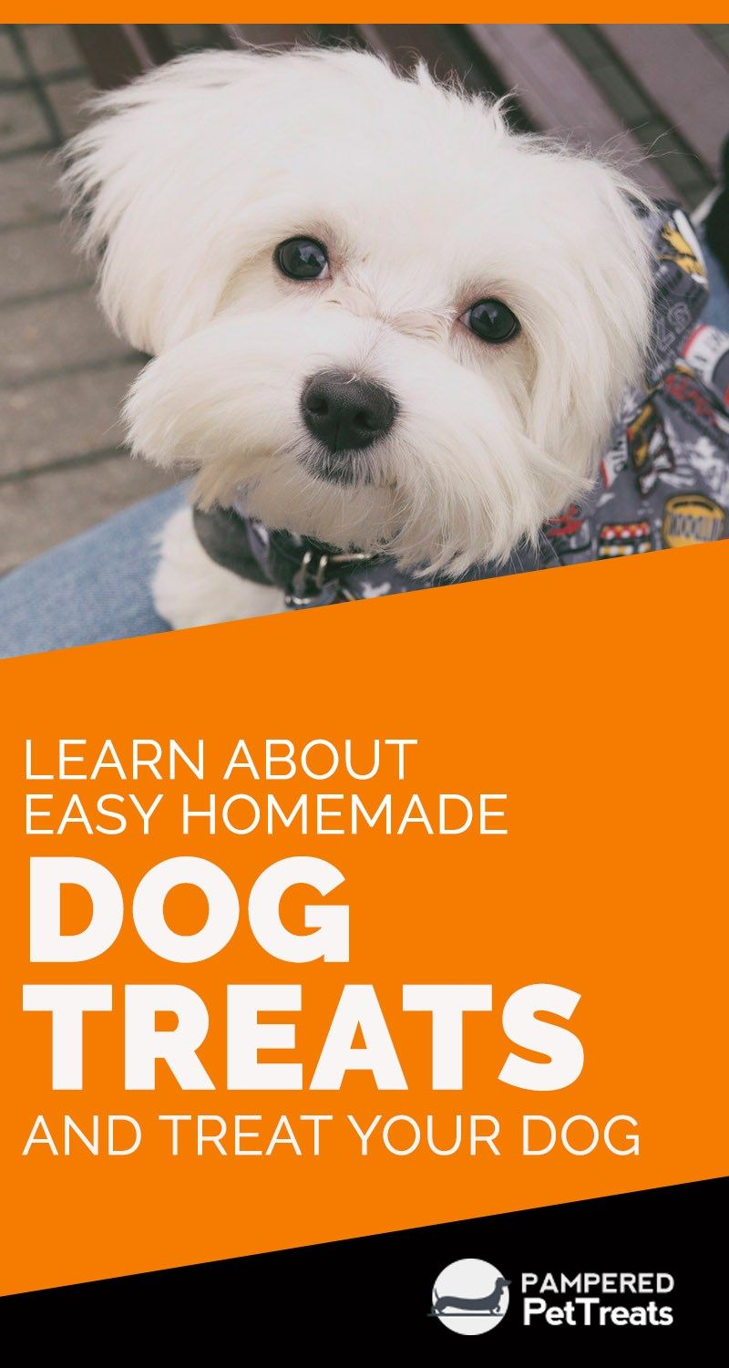 Learn About Easy Homemade Dog Treats And Treat Your Dog Homemade