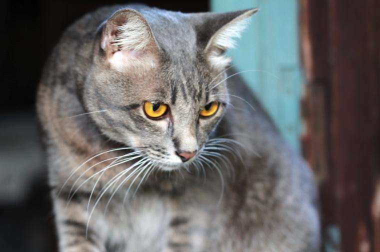 10 Rare Cat Coat Colors Rare Cats Cats Cat Pics