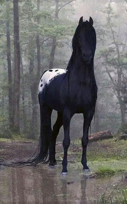 Wunderschönes Pferd, das genau weiß, wie hübsch es ist