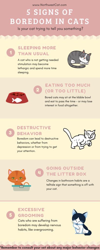 5 Signs That Your Cat Is Bored Daily Infographic Cat Infographic Boredom Infographic