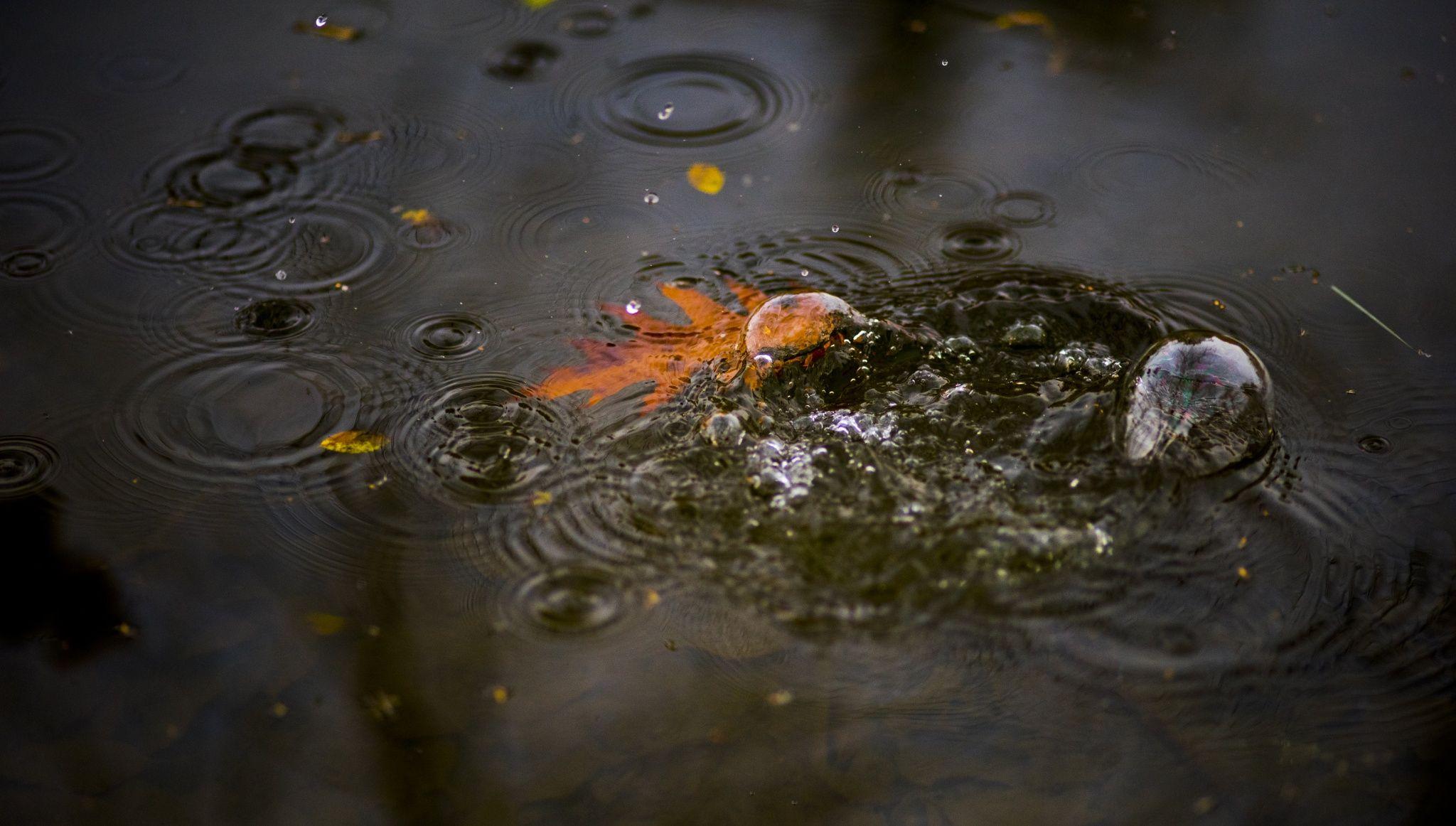 splash by robert moushi