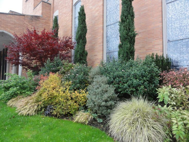 landscaping ideas for italian cypress Red maple Italian