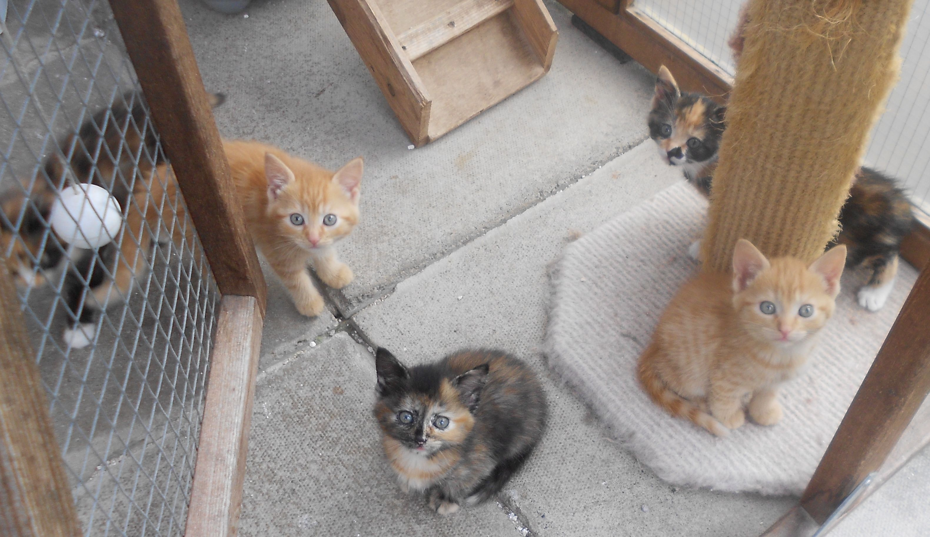 When Is It Our Turn For A Furever Home W Animals Cat Rescue Kittens
