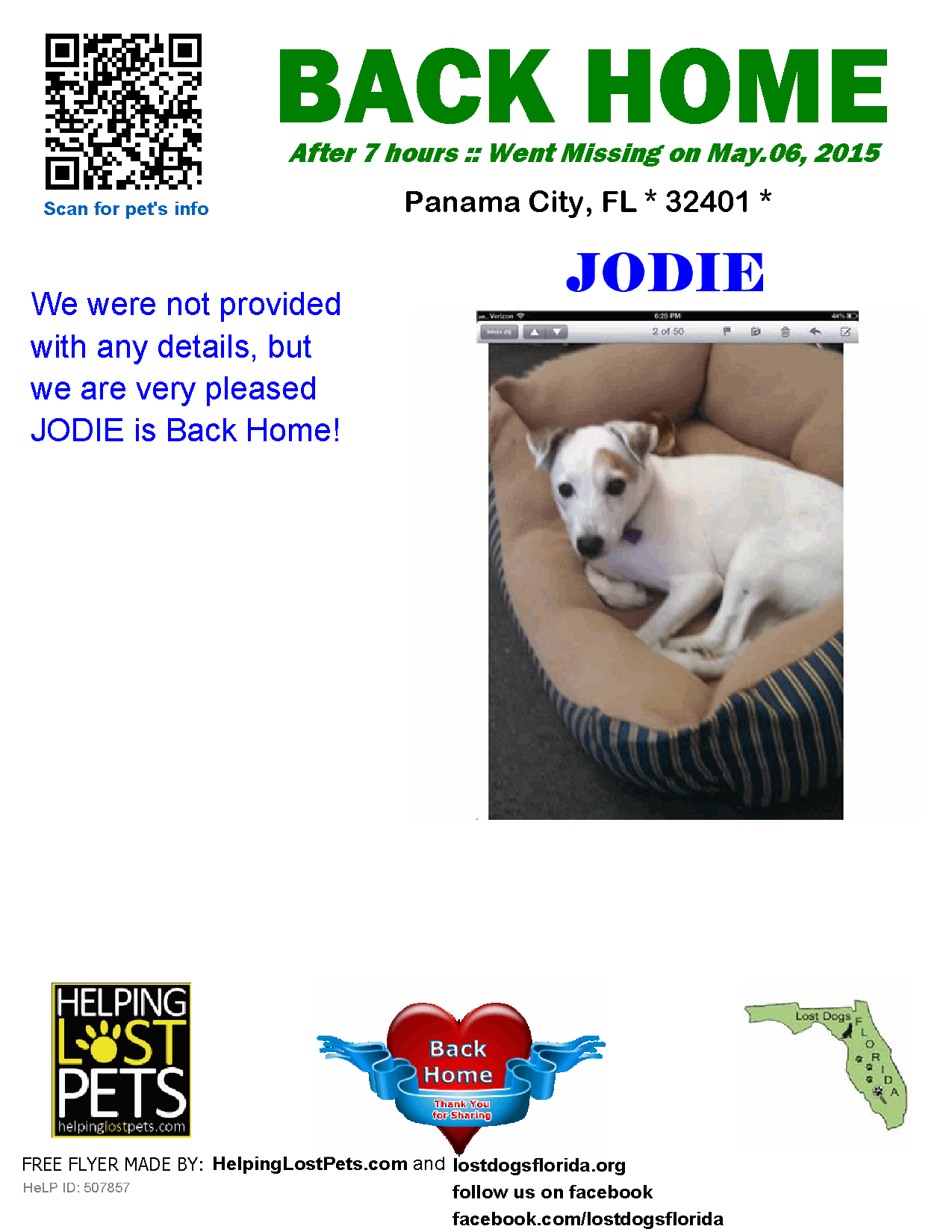 Helping Lost Pets Dog Jack Russell Terrier Back Home