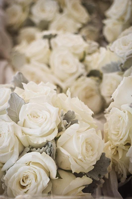 Dans Mon Jardin Secret Il Y A Rose Blanche Fleur Amour Nature Rose