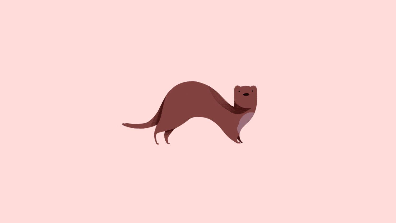 Ferret.jpg