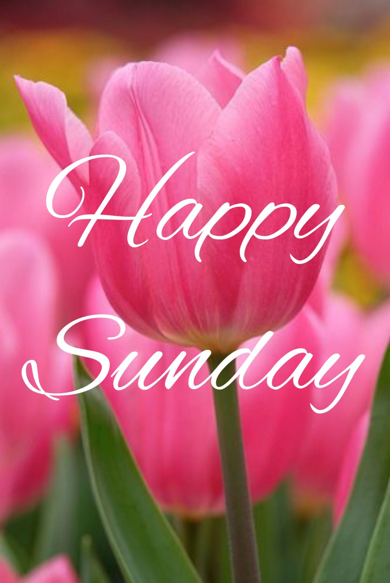 Inspiration Inspirationalquotes Motivate Motivation Quotestoliveby Selfesteem Motivationalquote Sunday Greetings Good Morning Happy Sunday Happy Sunday