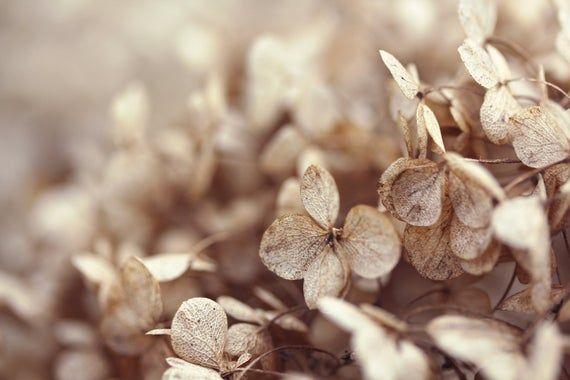 Winter Hydrangea, Flower Macro Photography, Digital Download, Nature Lover, Screensaver, Printable A