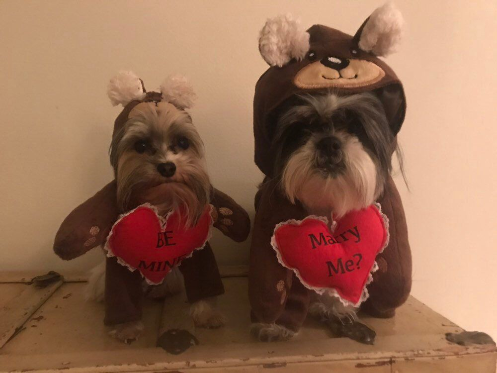 Deluxe Bear Dog Costume Perfect For Valentines Day Dogs Dog