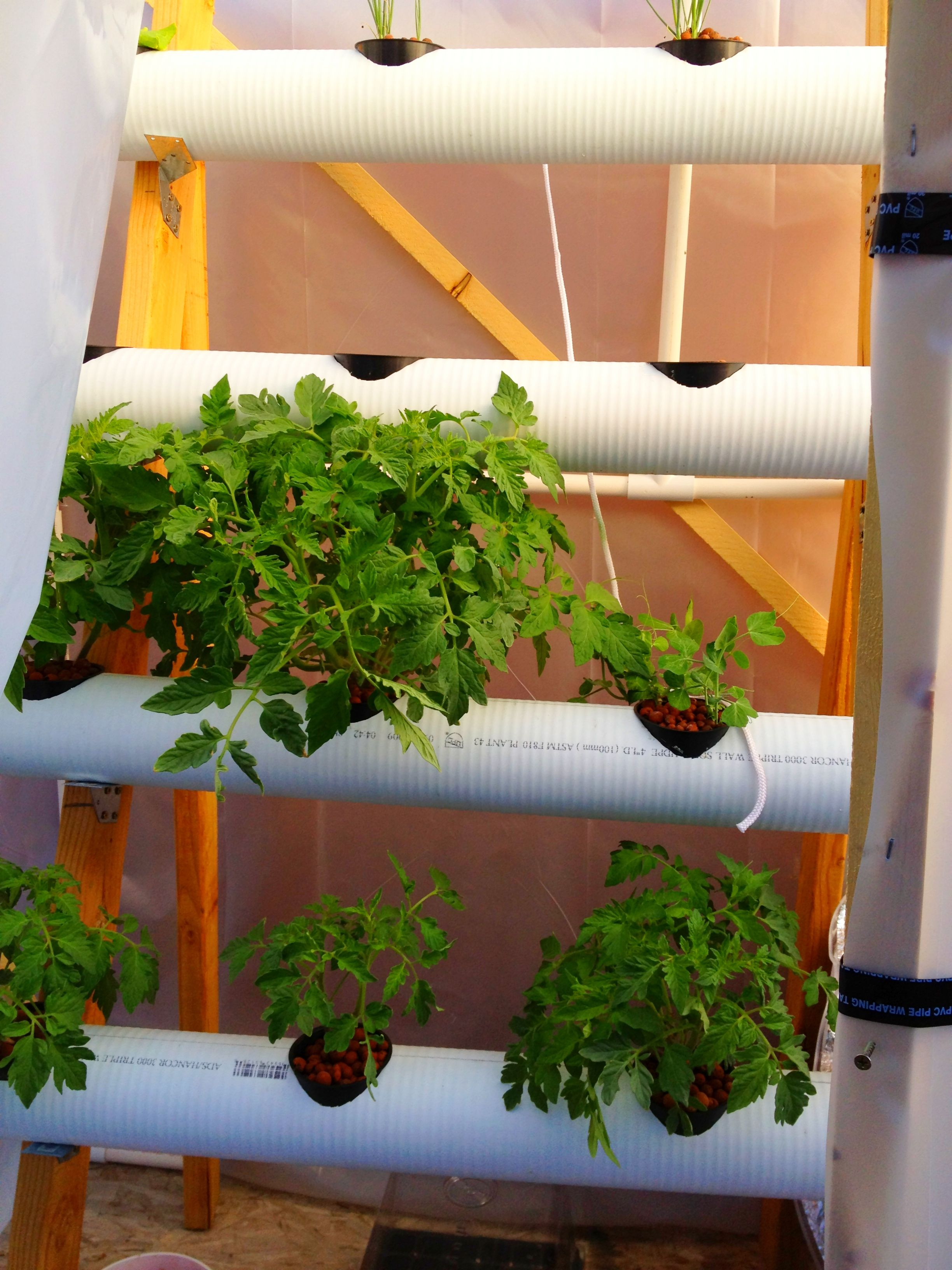 Hydroponics diy image by Rubicisca 🌿 on Agriculture ...