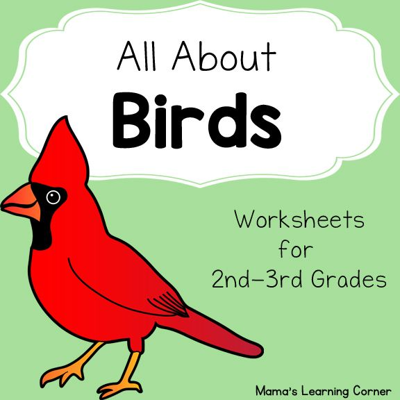 Birds Worksheet Packet for 1st-3rd Graders | 4-H Volunteer | Birds ...