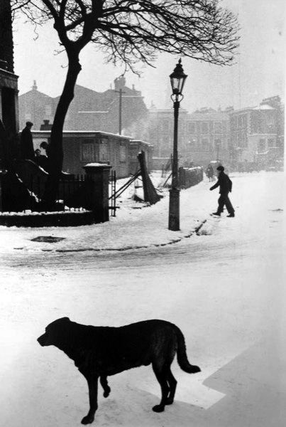 Dog, Snow, Waverley Walk, Harrow Road area 1955 © Roger Mayne