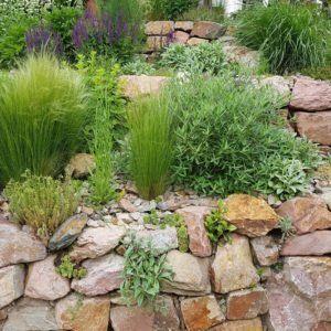 Trockenmauer im Garten bepflanzen - Plantura