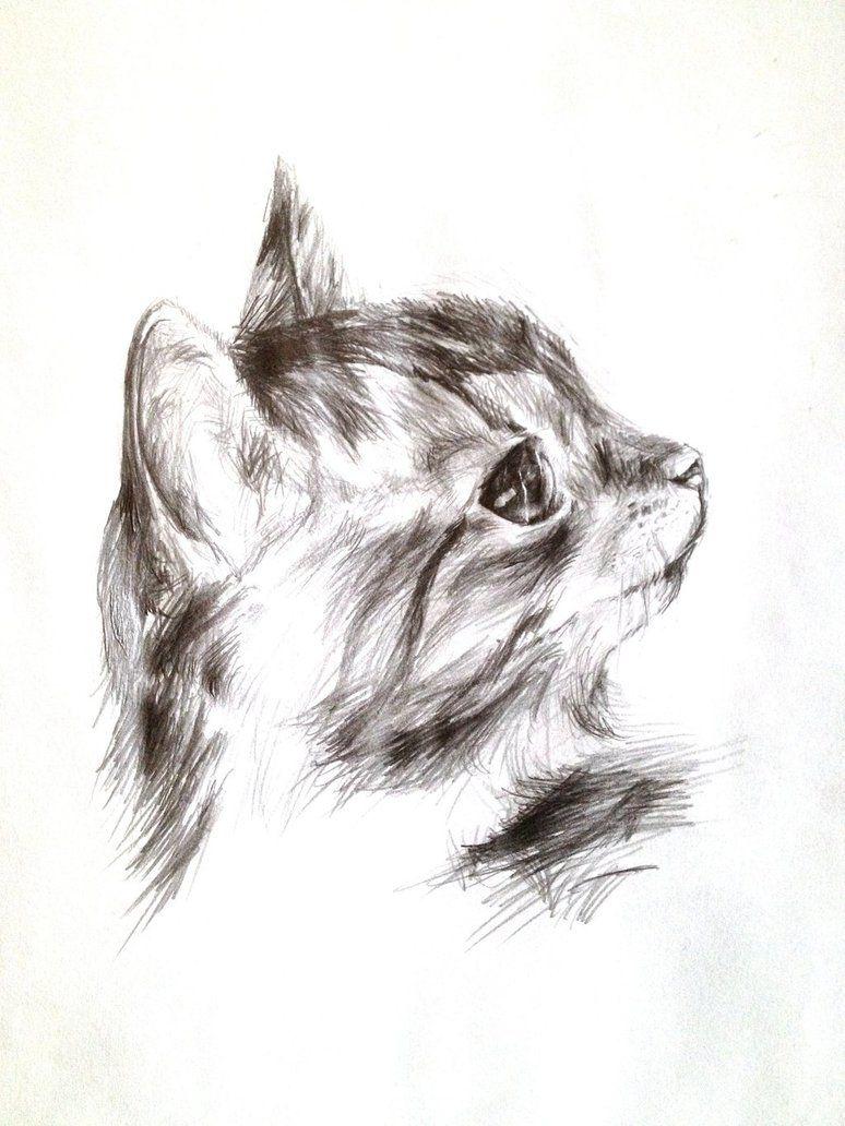 cat_sketch_by_acornballs d6v3mu8jpg 7741032
