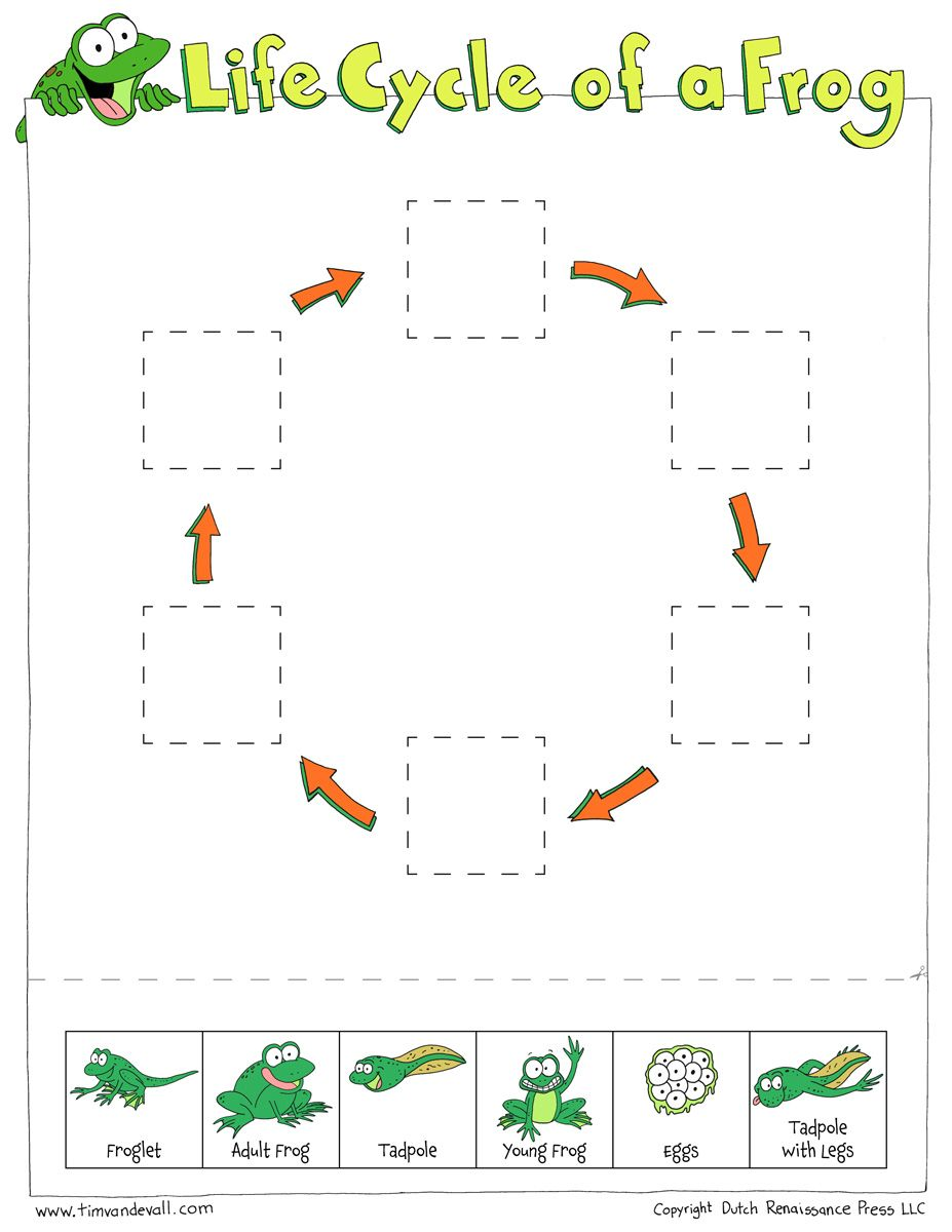 life-cycle-of-a-frog-worksheet.jpg (927×1200) | story book ...