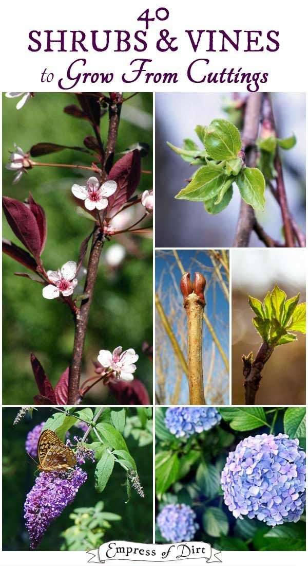 40 Shrubs Vines To Grow From Cuttings Printable List In 2020 Plant Cuttings Plants Plant Roots