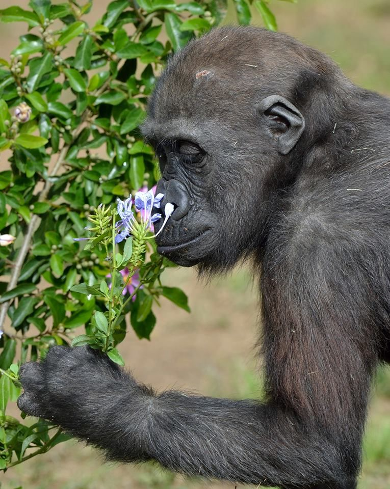 Stop and smell the flowers.