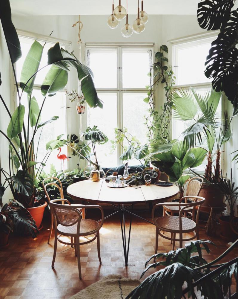 Plant Love: 7 inspirierende Pflanzen-Accounts (mit Bildern ...