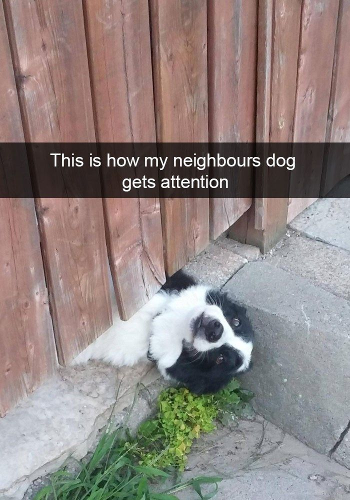 Funny Pictures of Dogs That Will Never Know How Funny They Are on Snapchat