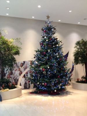 Botanica Nurseries:  Christmas Tree rental for offices