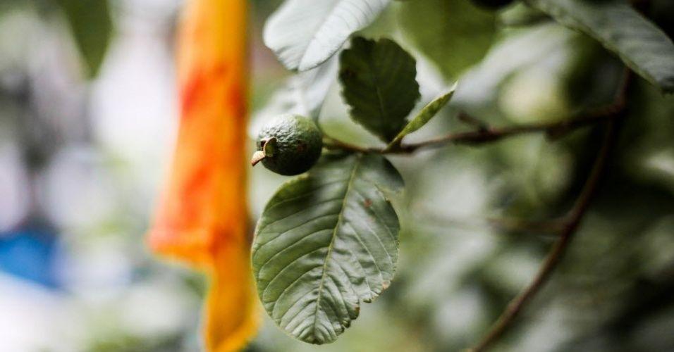 Em levantamento feito em 2013, o mestre em botânica pela USP Ricardo Cardim mapeou espécies nativas como cedro-rosa, embaúba, figueira, jeribá e pitangueira. Além destas, o terreno conta com árvores como macaúba, jambolão, abacateiro, goiabeira, jaqueira e jambeiro