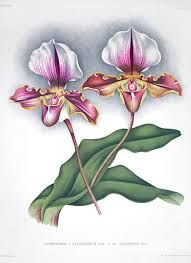 orquideas ilustraçao - Pesquisa Google