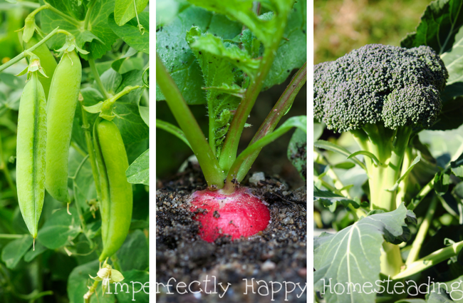 What to Plant in August for An Awesome Fall Garden is part of Home garden Vegetable - What seeds to plant in August for an awesome Fall garden  Zone 1, 2, 3, 4, 5, 6, 7, 8, 9 and 10 listed  Have your best vegetable garden ever!