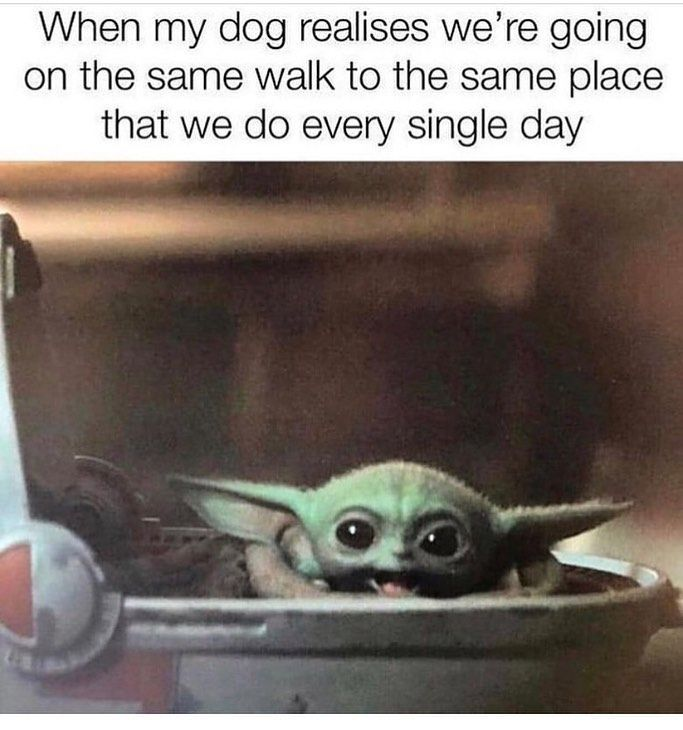 The 50 Best And Funniest Baby Yoda Memes 50 Best Part 3 Yoda Meme Funny Funny Memes