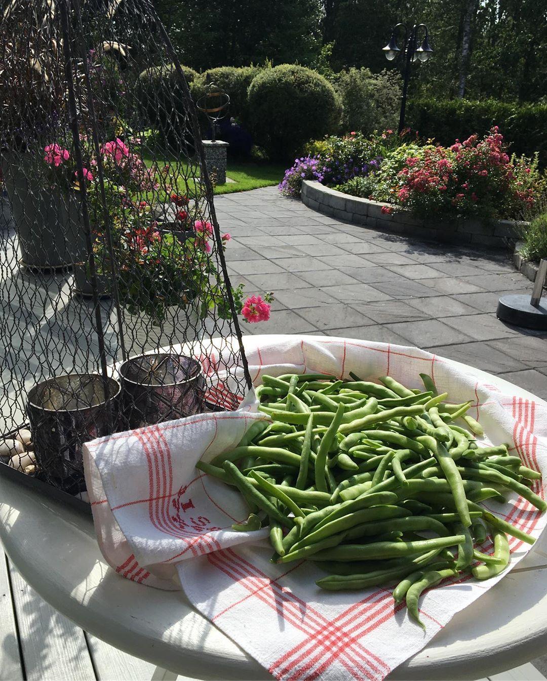 Plockat av det sista av bönorna! Förvällt dem och fryst in till senare tillfälle! 🤗👌#sverige