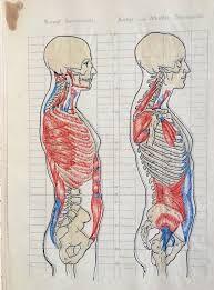 Kieli Anatomia