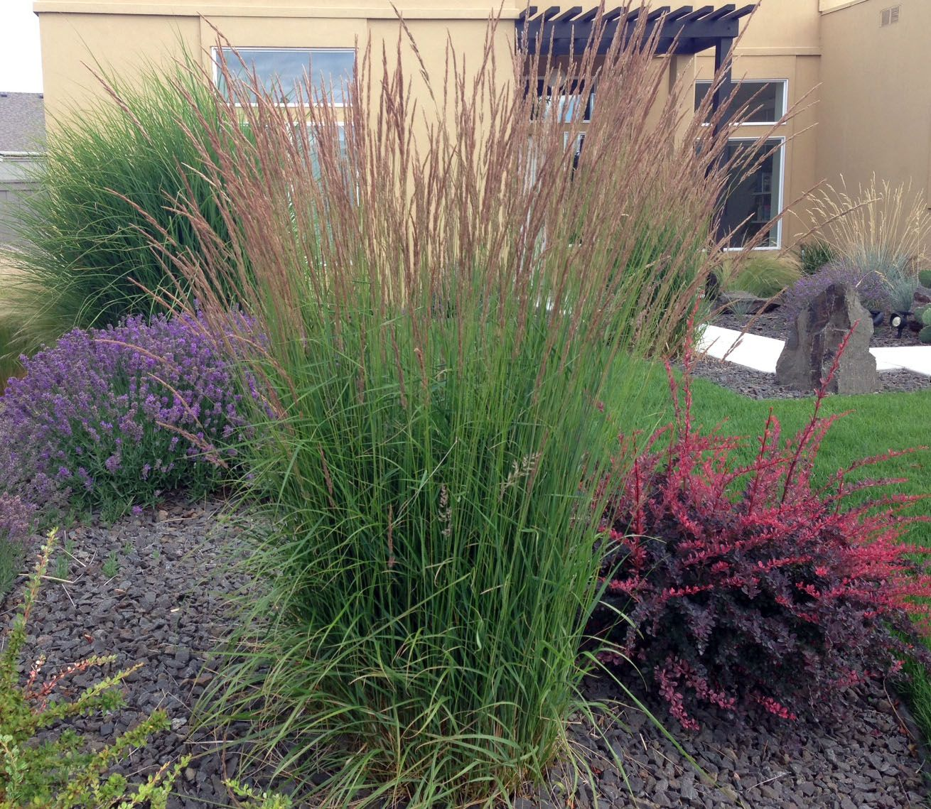 Ornamental grasses update your curb appeal with just one for Small ornamental grasses for sun