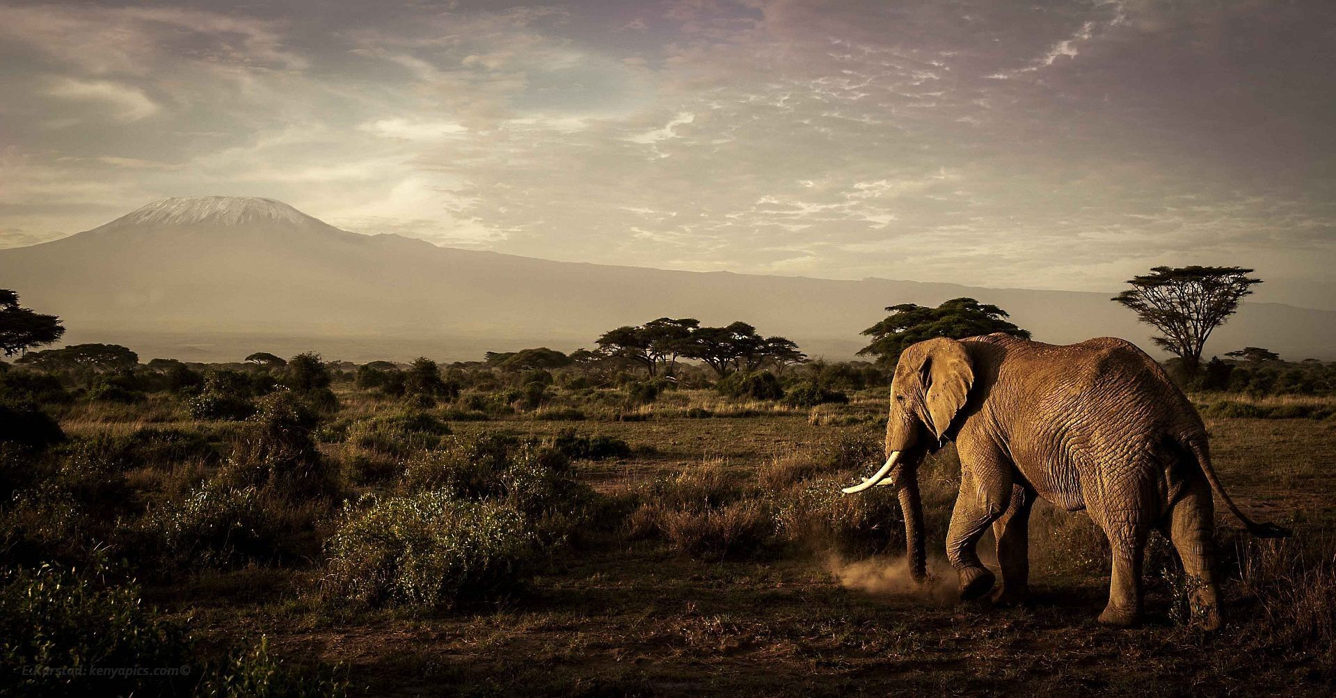 Elephants in Kenya. Amazing! | Coffee Lands | Pinterest | Kenya ...