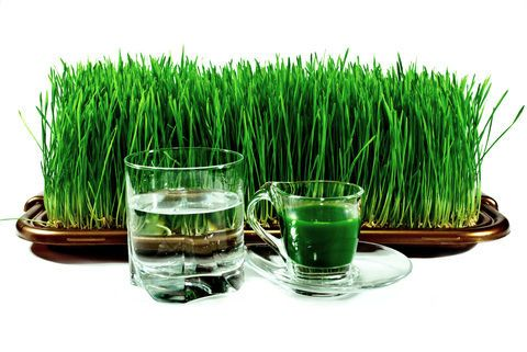 How To Make Your Grass Healthy