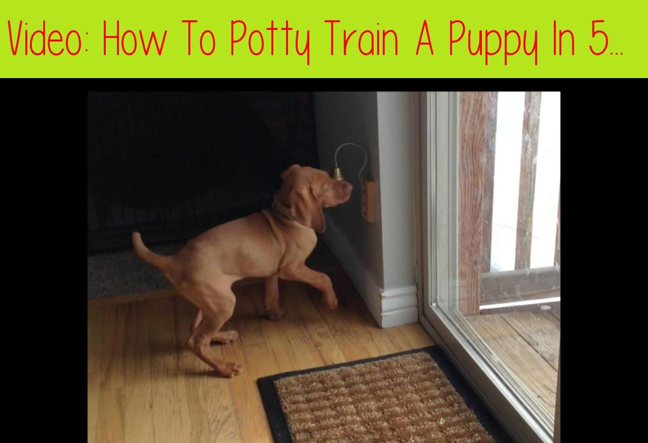 How to potty train a puppy in 5 daysi explain how we were