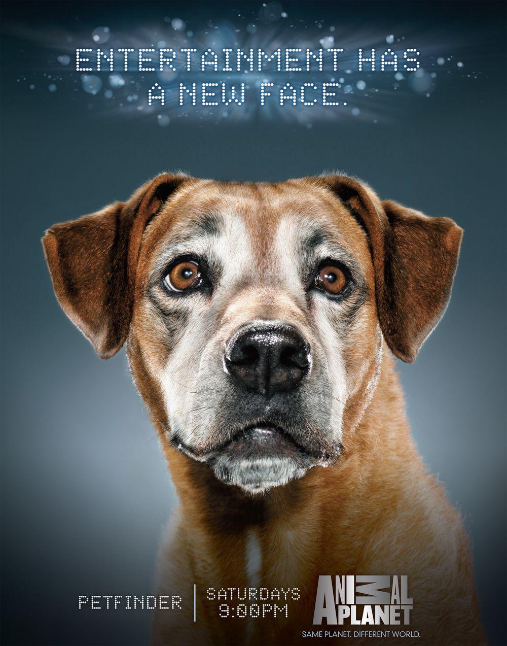 AnimalPlanet_dog.jpg