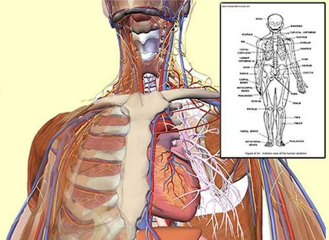 Human Anatomy And Physiology Study Course Review Great Study Course