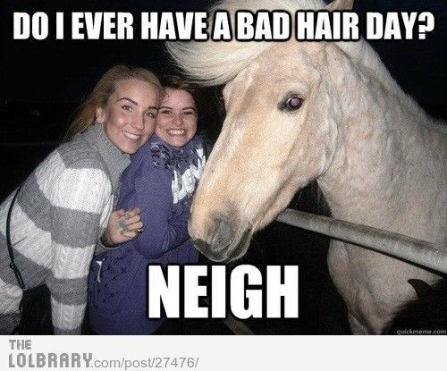 This horse is awesome!!